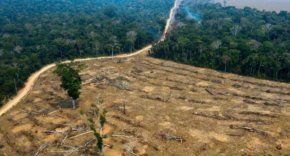 Ejército brasileño no logra éxito en reducción de deforestación de la  Amazonia en mayo | Internacionales | 5Días